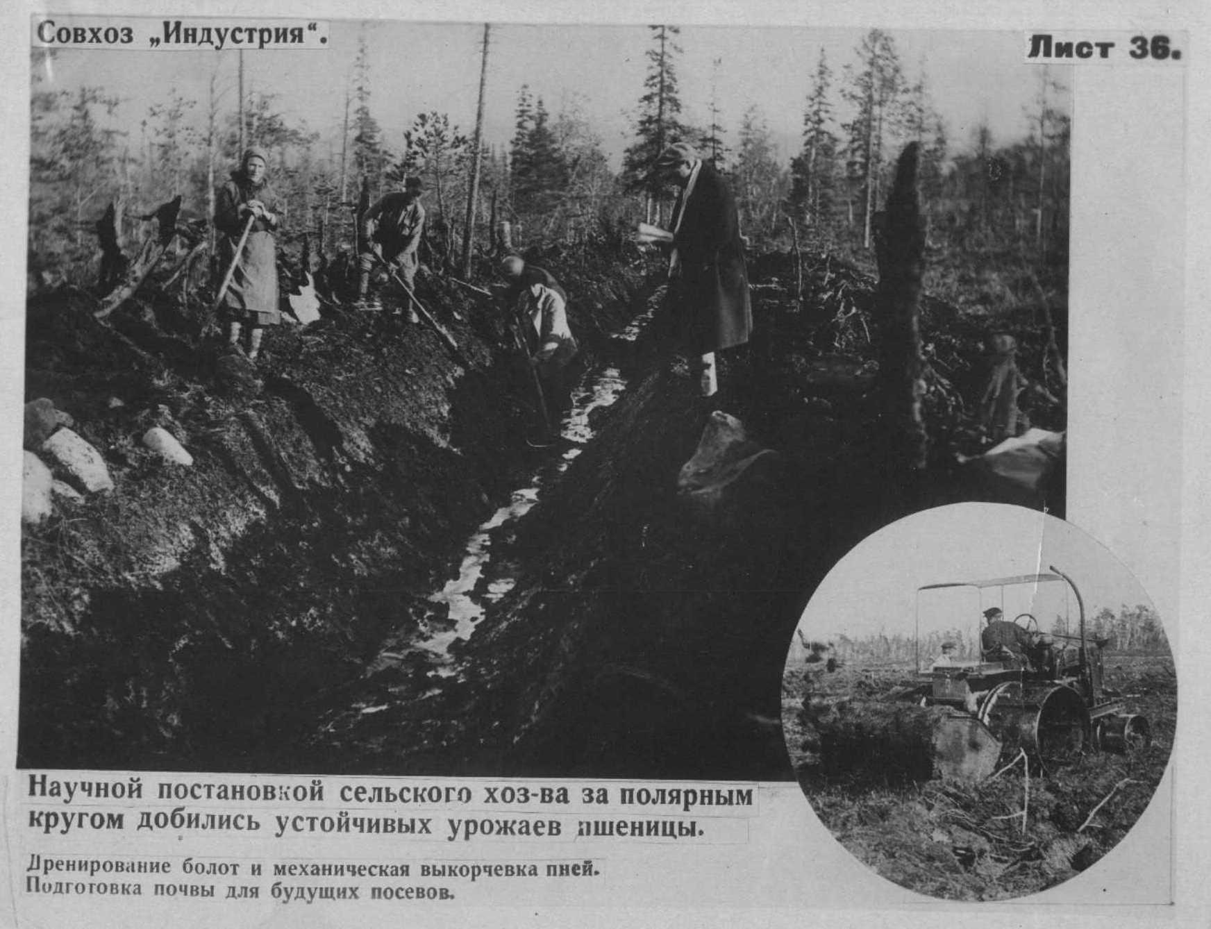 Рис. 11. Совхоз «Индустрия», Кольский полуостров, 50-е гг.
